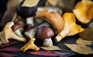 Mix of autumn wild forest edible mushrooms on black board