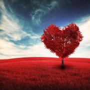 Love_Kit