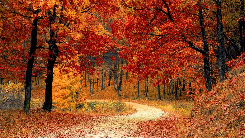 fall-autumn-red-season-1228x691