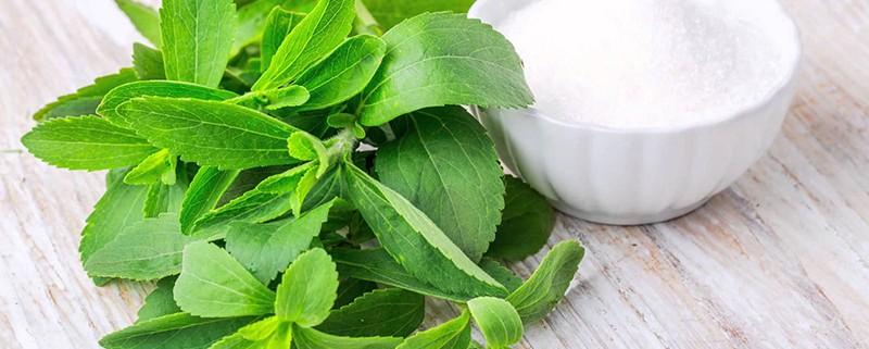 stevia-1200 630