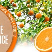 arance frutti osle