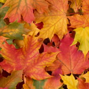autunno 1200-x-630-